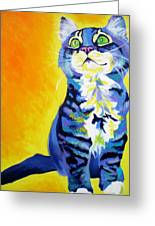 Cat - Here Kitty Kitty Greeting Card by Alicia VanNoy Call
