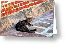 Cat Against Stone Greeting Card