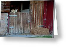 Cat And Barn Greeting Card