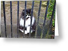 Cat At The Gate Greeting Card