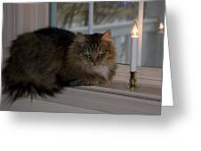 Cat By Candlelight Greeting Card