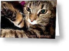 Cat Card Greeting Card