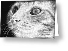 Cat Close Up Portrait Greeting Card