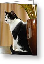 Cat Contimplation Greeting Card