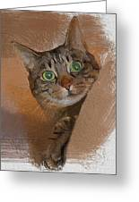 Cat Desire. Greeting Card
