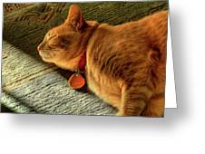 Cat Dream Greeting Card