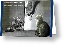 Cat Dropping In Greeting Card