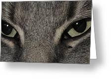 Cat Eyes 2 Greeting Card