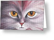 Cat Eyes Red Greeting Card