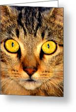 Cat Face Portraiture Greeting Card