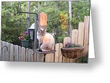 Cat In A Birdbath Greeting Card