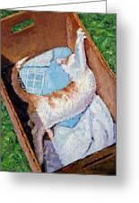 Cat In A Box Greeting Card