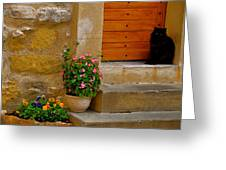 Cat In Capestang France Greeting Card