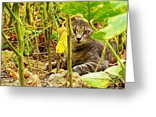 Cat In Field Greeting Card