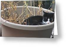 Cat In Flower Pot. Greeting Card