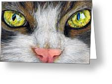 Cat In Pastel Greeting Card
