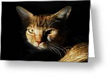 Cat In Shadow Greeting Card