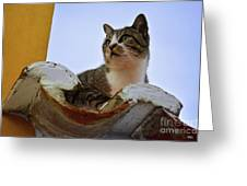 Cat In The Roof Greeting Card
