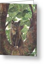 Cat In Tree Greeting Card