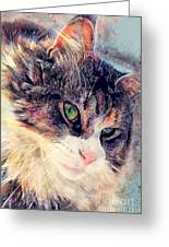 Cat Jasper Greeting Card