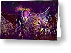 Cat Kitten Mieze Tiger Cat  Greeting Card