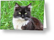 Cat Lawrence Greeting Card