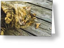 Cat Lie Wood Floor Greeting Card