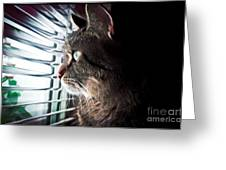 Cat Looking Out Window Greeting Card