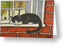 Cat Nap In Window Greeting Card