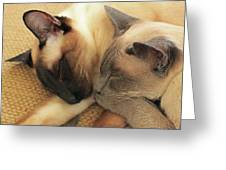Cat Nap With Toby And Sadi Greeting Card