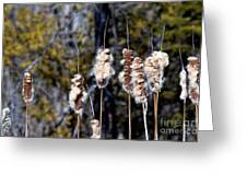 Cat O Eleven Tails Greeting Card