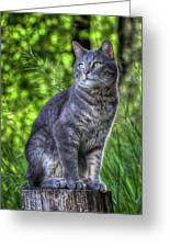 Cat On A Post Greeting Card