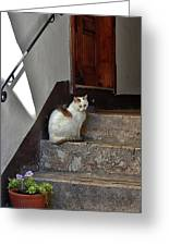 Cat On Steps Greeting Card