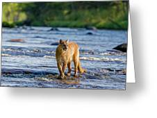 Cat On The River Greeting Card