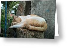Cat On The Tree Greeting Card