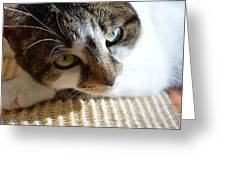 Cat Portrait Greeting Card