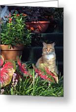 Cat Postcard Greeting Card