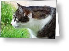 Cat Profile Greeting Card