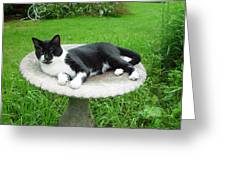 Cat Relaxing In A Birdbath In The Summertime  Greeting Card
