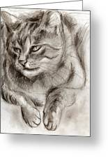 Cat Study Drawing No One Greeting Card