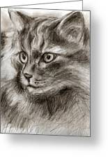 Cat Study Drawing No Two Greeting Card