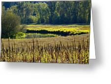 Cat Tails In The Sun Greeting Card