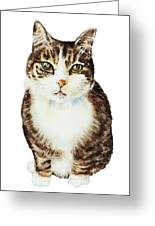 Cat Watercolor Illustration Greeting Card