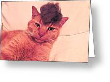 Cat Wearing A Wig Greeting Card