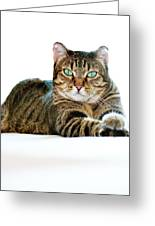 Cat With Bright Eyes Greeting Card