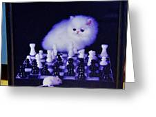 Cat With Chess Board Anbd Mouse Greeting Card