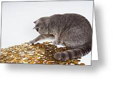 Cat With Coins Greeting Card