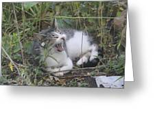Cat Yawning In The Garden Greeting Card