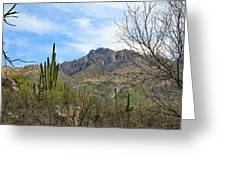 Catalina State Park 2 Greeting Card