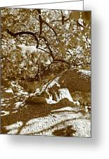 Catalpa Reflections Greeting Card